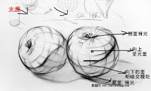 素描苹果结构分析图