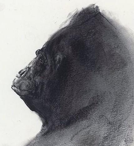 大猩猩素描