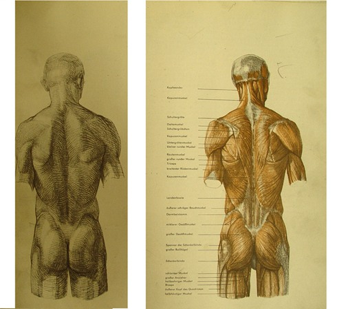 巴穆斯解剖素描全集