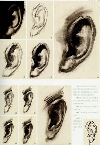 耳朵素描画法