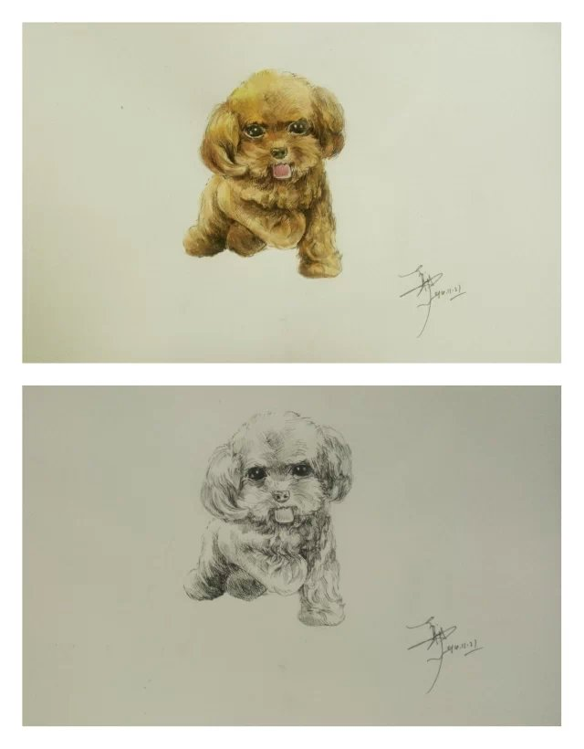 水彩画和狗素描