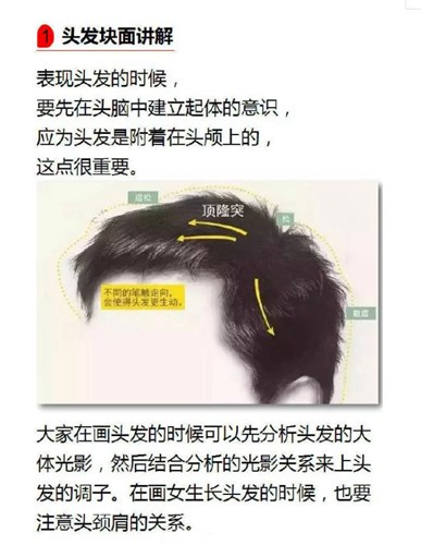 头发素描及其重要性