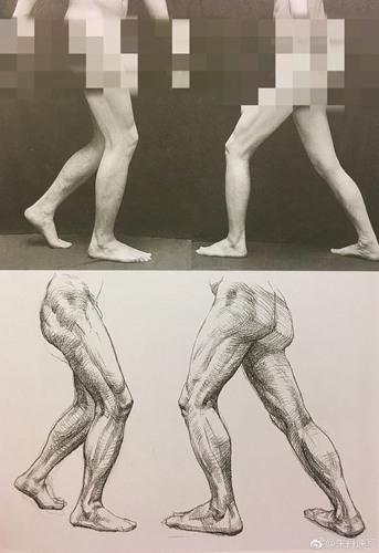 不同角度腿部照片与结构草图的比较
