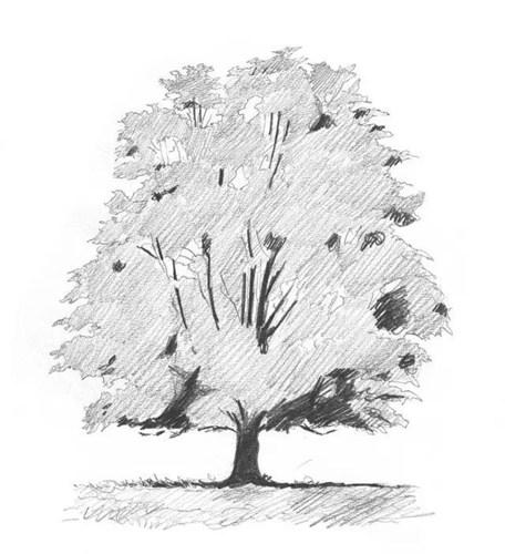 素描素描:初学者的五步素描