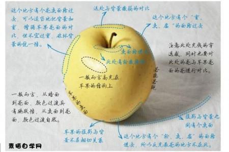 苹果素描画法一