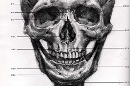 人物头骨肌肉与素描头像关系讲解