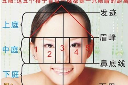 三庭五眼比例图,四高三低分别是?