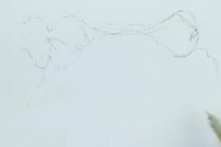 钢笔素描河马教程