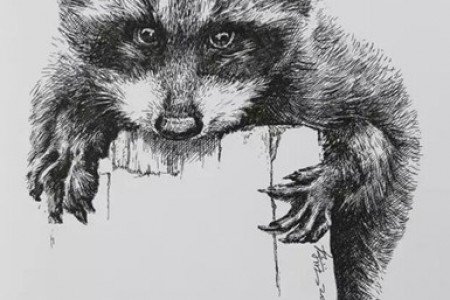 中性笔画教程:浣熊画法