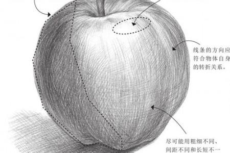 素描排线技巧:线条的三维空间关系 体积的塑造