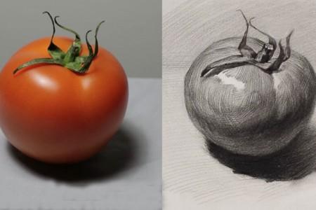 西红柿番茄素描画法步骤 画西红柿的视频教程