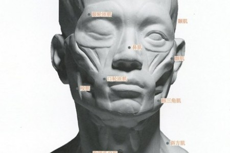 石膏头像的骨骼与肌肉素描教程 名称 高清图片