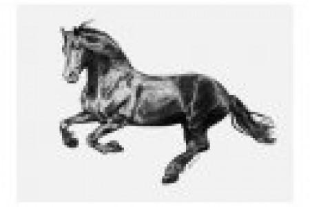 16匹马的草图