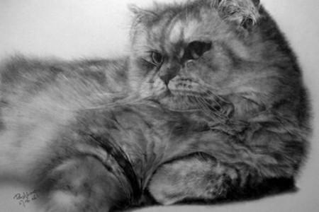 超写实猫素描写实猫