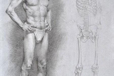 人体肌肉和骨骼草图的比较