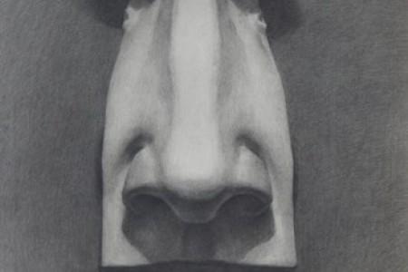 石膏鼻子草图
