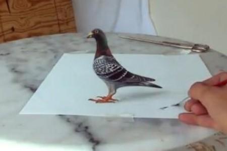 鸽子三维立体主义绘画教程