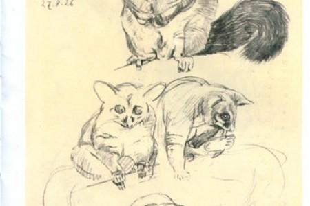 扫尾袋动物素描图