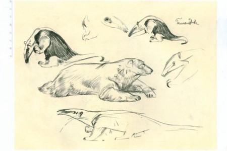 素描动物:北极熊和食蚁兽