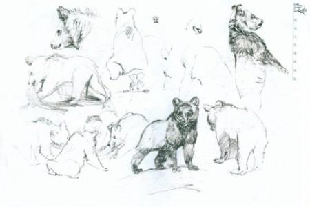 动物素描棕熊熊宝宝