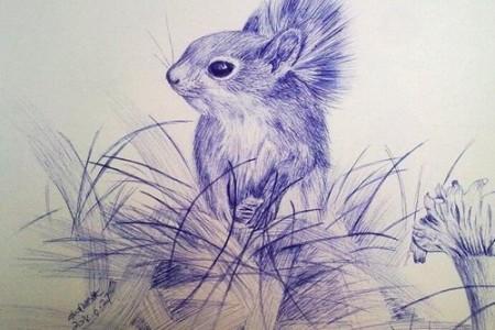 松鼠素描图片手绘松鼠素描
