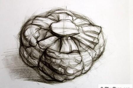 蔬菜草图:花椰菜和卷心菜的结构草图