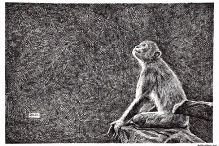 猴子素描动物笔画