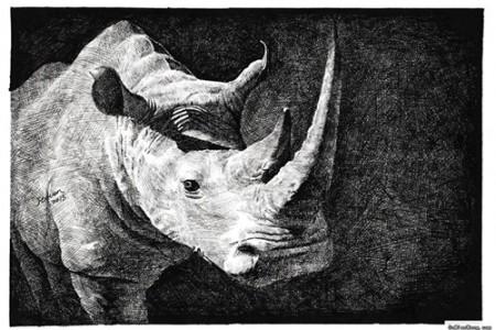 犀牛素描动物素描手绘