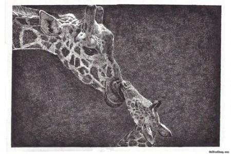 大长颈鹿和小长颈鹿的温馨素描