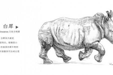 钢笔素描:奔跑的犀牛(白犀)