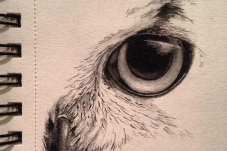 用彩色铅画的逼真猫头鹰眼睛素描