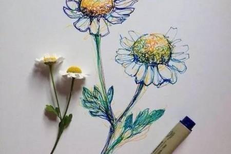 针笔素描花朵美丽创意手绘