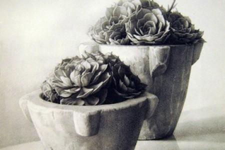 素描花:羊肉植物的美丽素描
