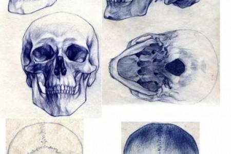 圆珠笔绘画:从各个角度画头骨的过程