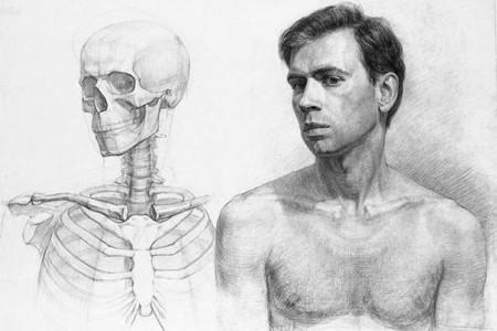 人体素描学习材料:人体骨骼内部结构分析图