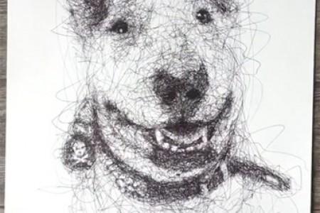圆珠笔动物素描:斗牛梗和狗的视频绘图