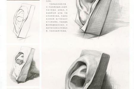 石膏耳朵草图图片完整结构着色步骤教程