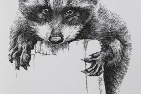 中性笔画课程:浣熊画
