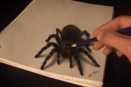 手绘超逼真3D立体图蜘蛛