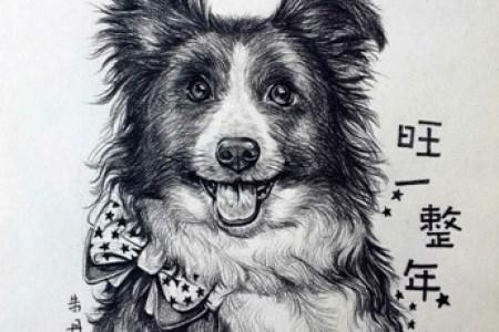 狗狗素描课程可爱狗狗艺术作品