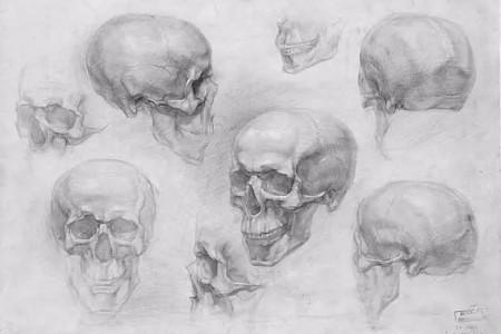 不同角度的颅骨素描