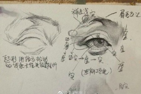 画出五个面部特征的草图,并详细解释教程图片。
